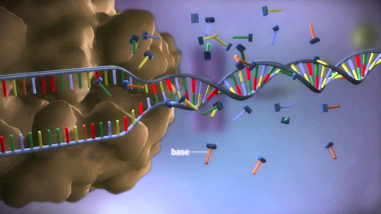 Building Proteins from Amino Acid Chains