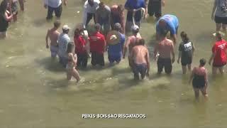 Voluntários salvam peixes-bois encalhados em praia dos EUA