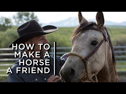 How to make a horse a friend. One cowboy's partnership with horses | The Nature of Things