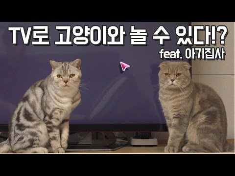 TV로 고양이들과 놀아줄 수 있다!?(feat.아기집사)You can play with cats with TV!? (feat. Baby Butler)【수리노을 SURI&NOEL】