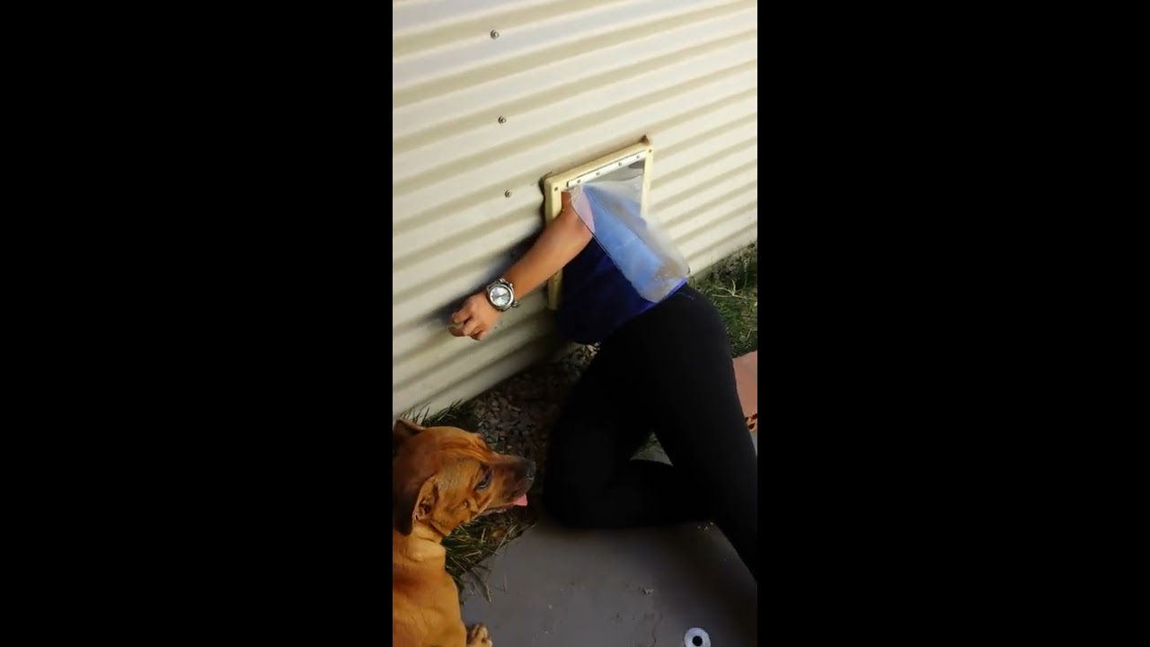 Girl Stuck In Doggy Door Youtube