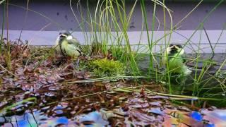 Birds feeling great under Twinstar Light 900E