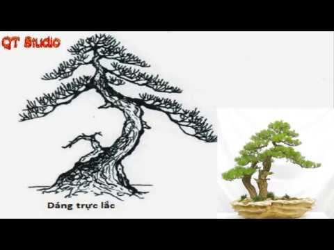 Những thế cây nhiều người chơi nhất hiện nay | Cách tạo thế bonsai | QT Studio