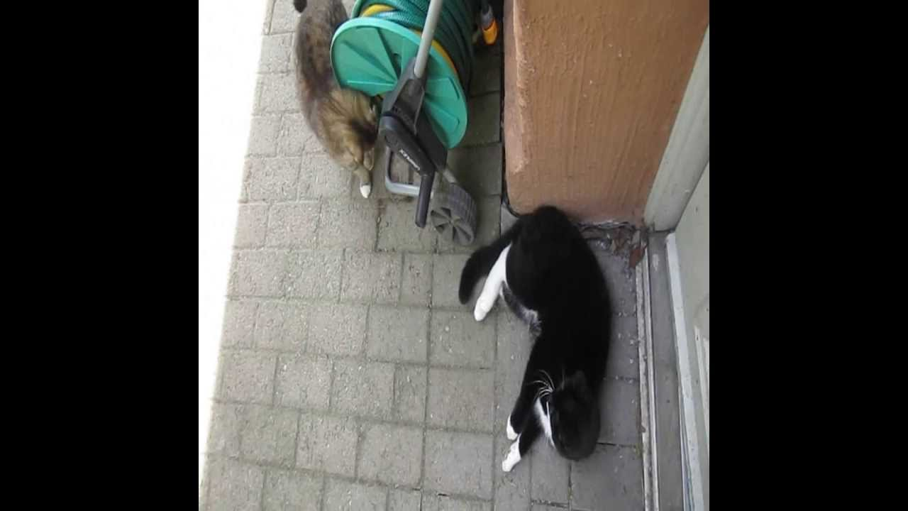 Fight Club 2 Tufsi Bosse Cat Fight Trailer Youtube
