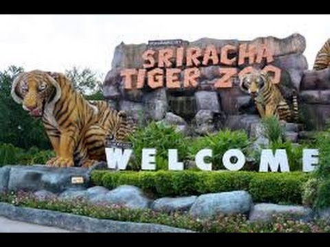 Sriracha Tiger Zoo, Pattaya