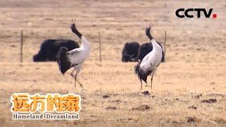 《远方的家》 20200520 行走青山绿水间 湿地:候鸟家园| CCTV中文国际