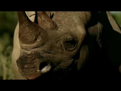 Wilderness Safaris & Standard Bank – partnering for growth.
