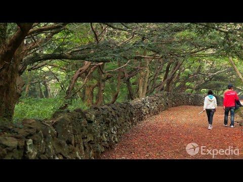 Bijarim Forest, Jeju Island Vacation Travel Guide | Expedia