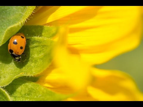 Tips & Tricks on Macro Photography - PLP #154