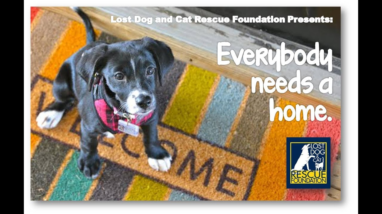 Lost Dog and Cat Rescue Foundation Presents Everyone Needs a Home