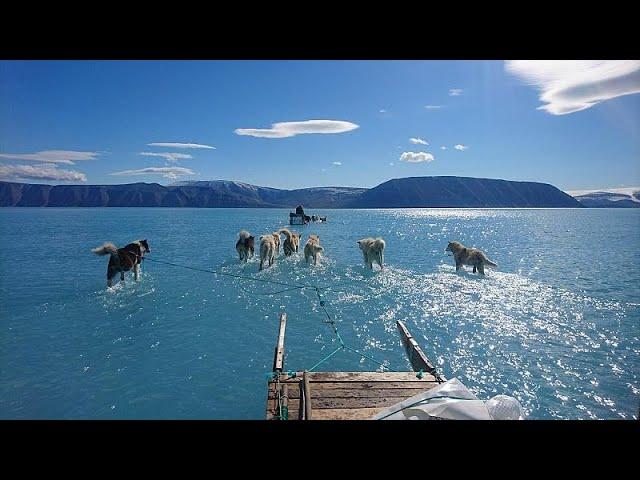 VDO สุนัขลากเลื่อนวิ่งไปบนน้ำที่กรีนแลนด์