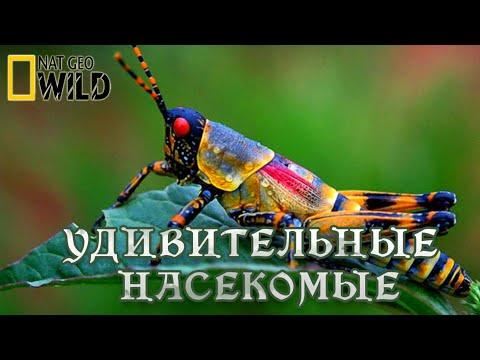 Удивительные насекомые. Мир природы, дикие животные. #Документальный фильм. National Geographic - Видео онлайн