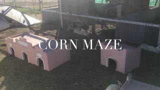 """""""corn Maze"""""""