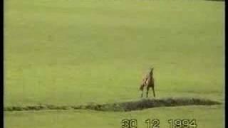 Drag Hunting 2 - The humane alternative