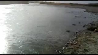 Сузак рыбалка