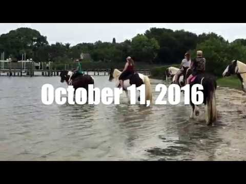 Horseback Riding In The Ocean | C Ponies
