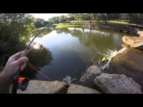 Fly fishing kansas wipers doovi for Trout fishing in kansas