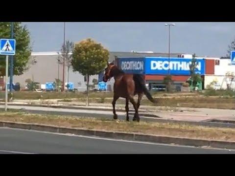 Alerta en As Gándaras por la presencia de un caballo suelto