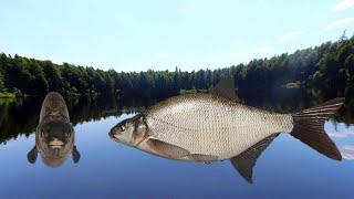 Русская рыбалка 4 РР4 Стрим Russian fishing 4 Озеро Старый острог 01 06 21