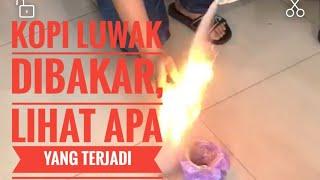 Download Video Video Kopi Luwak Dibakar Jadi Seperti Kembang Api MP3 3GP MP4