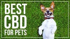 CBD For Pets Miami Shores