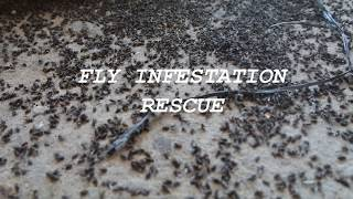 Fly Infestation Rescue