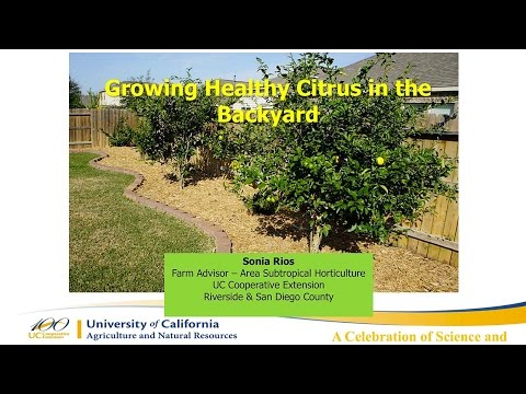 Growing Healthy Citrus in the Backyard