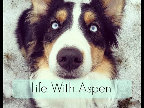 Life With Aspen Trailer - Stand By You