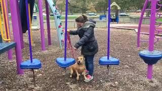 Dog Training | Confidence building with  Mairgot | Solid K9 Training Dog Training