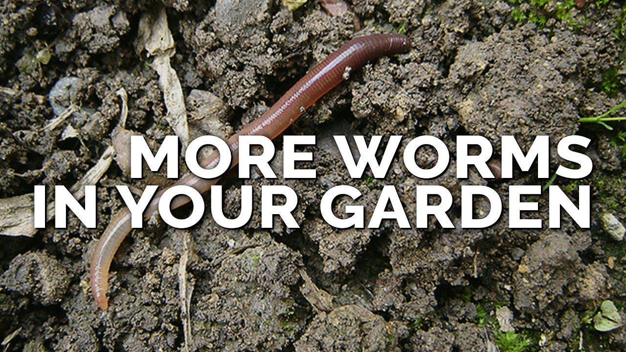 How To Attract More Earthworms To Your Garden Why They Matter