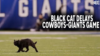 Black Cat Takes The Field And Steals Show During Monday Night Football