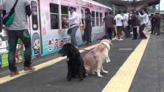 伊賀市、伊賀鉄道の「わんわん電車」 ムックは電車から見る景色に夢中。...