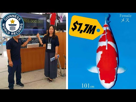 This is worlds most expensive Koi Fish $1,700,000,- USD (RECORD)