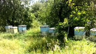 Світ Меду. Бджолярське господарство