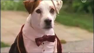 Wishbone PBS Kids || Bark to the Future (Full episode) || The Time Machine