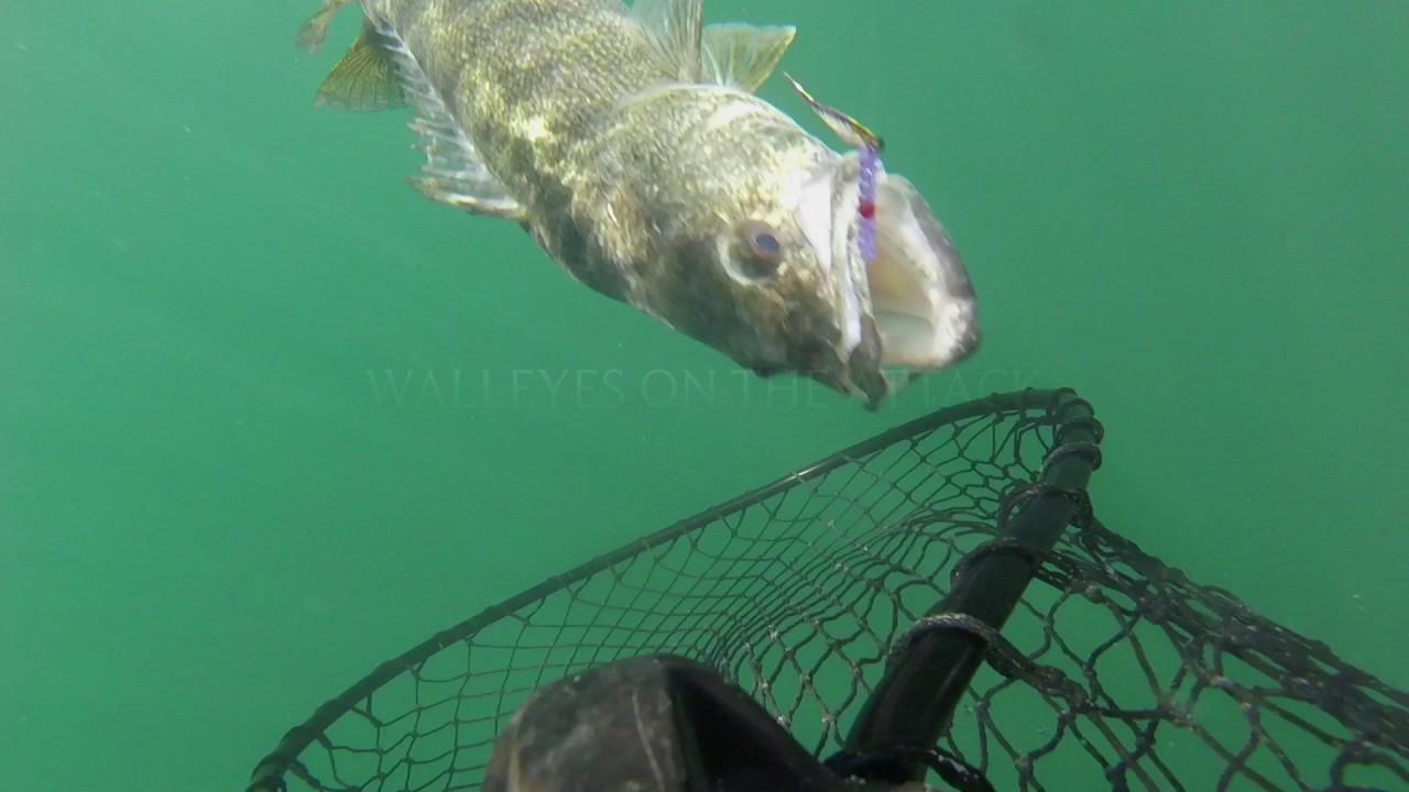 Walleye Fishing On Lake Erie Saginaw Bay And Inland