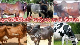"""భారతదేశంలో ఆవుల జాతి రకాలు""""types of indian cows"""""""
