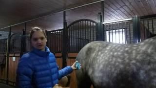 продолжение урока как надо чистить лошадь
