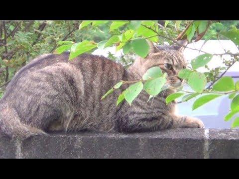 【猫の喧嘩が心配だったのら】A cat that was worried about the fight of the cat