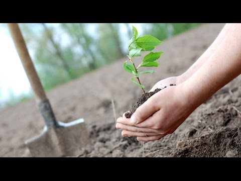 Responding to climate change not as simple as planting more trees