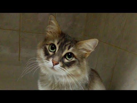 Опухоль головного мозга и эпилепсия у кошки не приговор