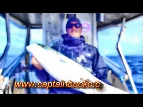 Bay of Islands fishing charter-Big kingfish