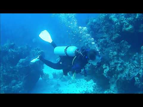 meet a submarine sonar in bahamas