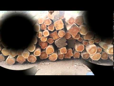 Exporting Teak Logs From Ecuador