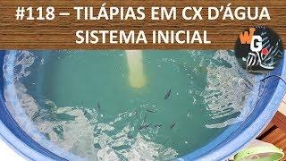 Criação de Tilápias em Caixa D'Água - Sistema Inicial - EP003 - #118