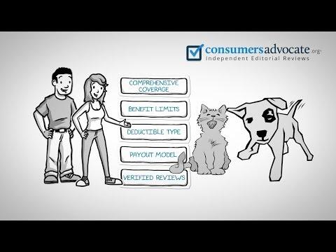 Pet Insurance - 10 Best Pet Insurance Explained