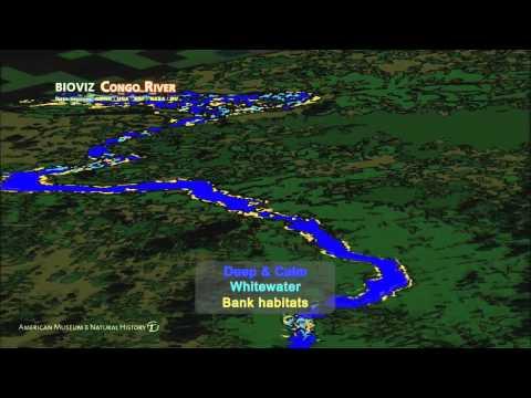 Science Bulletins: Congo River