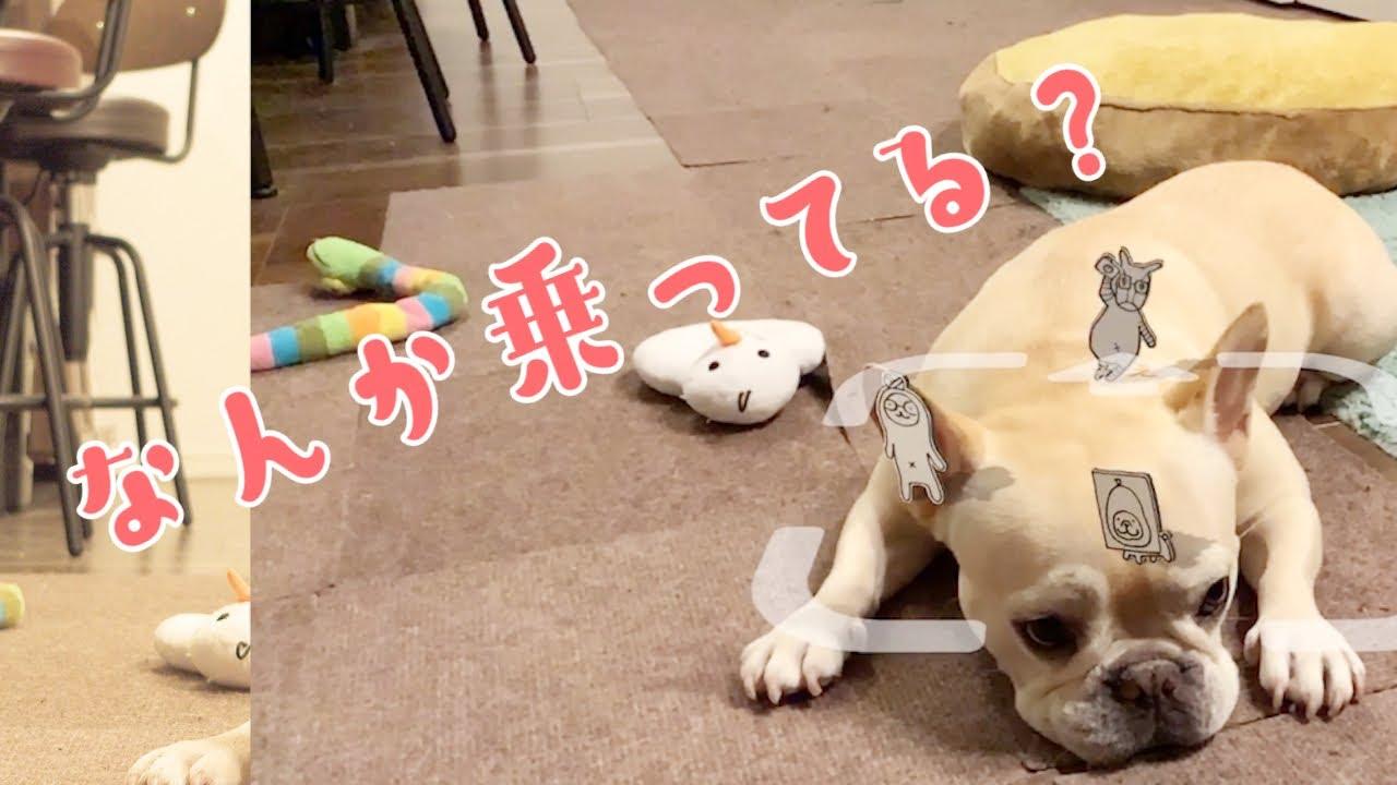 #360 らくがきARで犬と一緒に家族写真【フレンチブルドッグのおかか vlog】【frenchbulldog】