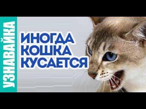 Вопрос: Как правильно обращаться с агрессивной кошкой?