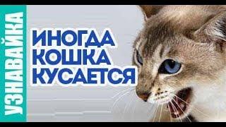 ✅ Почему кошка кусается, царапается и становится агрессивной.  🐈